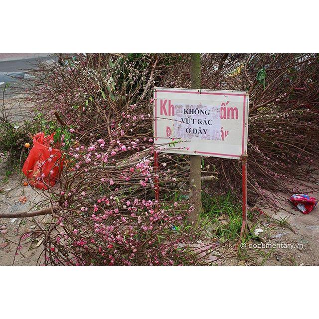 [Instagram] Hết Tết #peachblossom #warning #dump #hanoi
