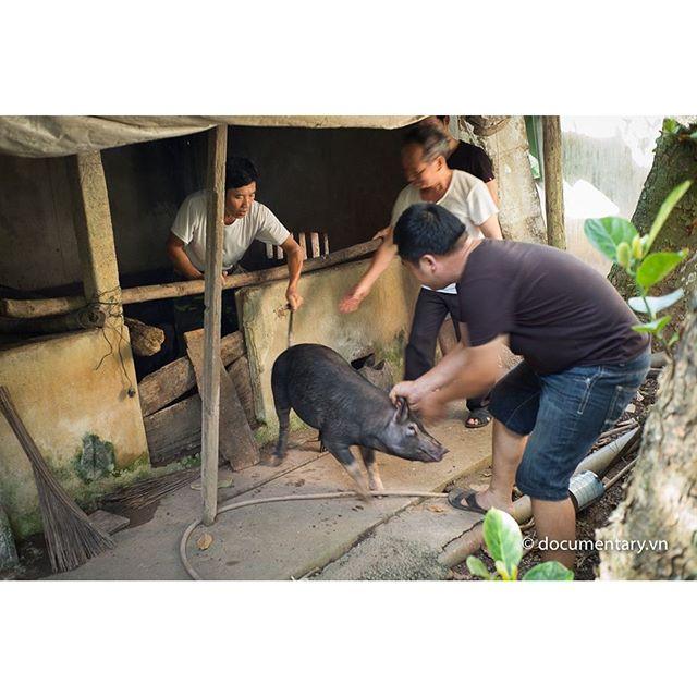 [Instagram] Bắt lợn #men #surrounding #pig